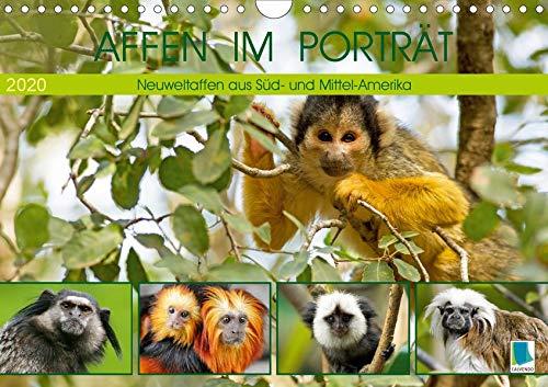 Affen im Porträt: Mittel- und Süd-Amerika (Wandkalender 2020 DIN A4 quer)