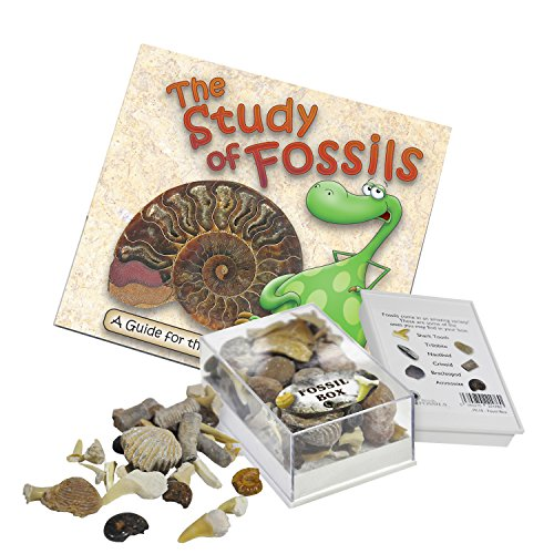 fossil-box-with-study-of-fossils-booklet