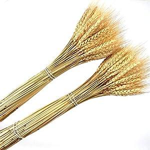 Dongliflower 200 piezas seco natural trigo conjunto flor arreglos casa mesa boda fiesta centro piezas decorativo 24 «de alto