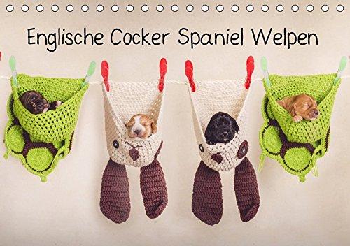 Englische Cocker Spaniel Welpen (Tischkalender 2019 DIN A5 quer): Monatskalender mit Cocker Babys (Geburtstagskalender, 14 Seiten ) (CALVENDO Tiere) -