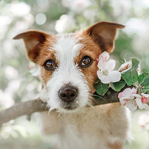 jack-russell-with-stick-dog-greetings-card