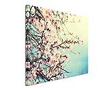 Paul Sinus Art Kunstfoto auf Leinwand 60x40cm Naturfotografie – Rosa Kirschblüten auf Leinwand Exklusives Wandbild Moderne Fotografie für Ihre Wand in Vielen Größen