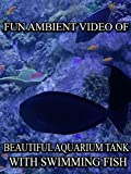 Fun Ambient Video of Beautiful Aquarium Tank With Swimming Fish [OV]