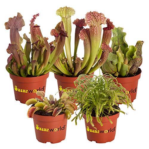 Swampworld Fleischfressender Pflanzen-Mix P9-5 Stück + Farbige Töpfe