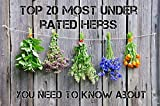 Portal Cool Top 20 Küche Gewürze für Das Kochen 20 Verschiedene Arten Kräuter 800 Samen