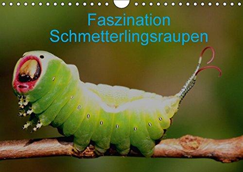 Faszination Schmetterlingsraupen (Wandkalender 2018 DIN A4 quer): In diesem Kalender werden seltene Raupen von Tag- und Nachtfaltern vorgestellt ... [Kalender] [Apr 01, 2017] Erlwein, Winfried