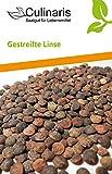 Gestreifte Linse | Bio-Linsensamen von Culinaris Saatgut