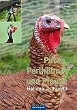 Puten, Perlhühner und Pfauen: Haltung und Zucht