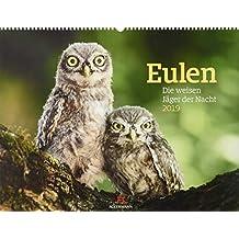 Eulen - weise Jäger der Nacht 2019, Wandkalender im Querformat (54x42 cm) - Tierkalender / Vogelkalender mit Monatskalendarium