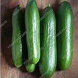 100 piezas / paquete siembra pepino grande Raras NO-GMO delicioso pepino de frutas y semillas de hortalizas para jardín Plantación de Bonsai plantas de pepino Semillas