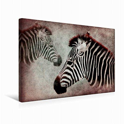 Premium Textil-Leinwand 45 cm x 30 cm quer Zebra | Wandbild, Bild auf Keilrahmen, Fertigbild auf...