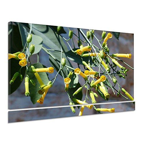Blaugrüner Tabak Blüte Gelb Nicotiana Glauca Leinwand Poster Druck Bild dz0377 120x90