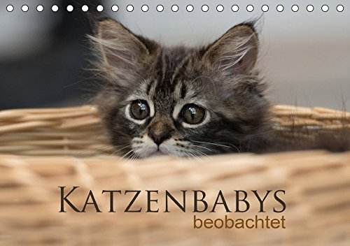 Katzenbabys beobachtet (Tischkalender 2017 DIN A5 quer): Dreizehn zauberhafte Bilder der süßen Katzenbabys. Mit der Kamera beobachtet, machen sie viel ... (Monatskalender, 14 Seiten ) (CALVENDO Tiere)