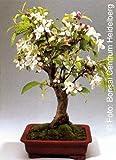 Tropica - Bonsai - melo decorativo malus halliana - 30 semi