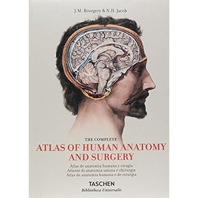 Atlas De Anatomia Humana Gratis Pdf