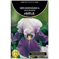 Bulbos - Iris Germáncia azul blanco - Batlle