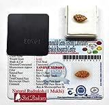 Shri Rudram 1 Mukhi Rudraksha Java Bead Lab Certified Size : 9 - 10 mm (Brown)