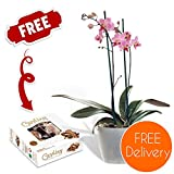 Quality Plants Delivered - Free UK Delivery - Potted Indoor Twin-Spiked Orchid Plant with Free Chocolates and Plant Care Instructions - Perfect for birthdays, anniversaries and thank you gifts