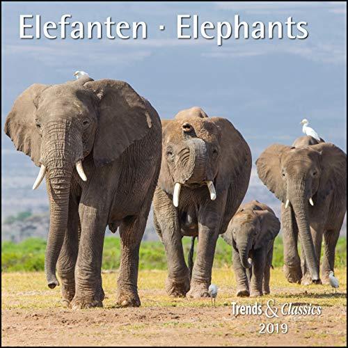 Elefanten Elephants 2019 - Trends & Classics Kalender