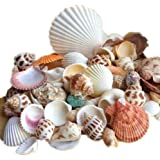 Ardisle Beach Mixed Sea Shells Shell Craft Table Decor Aquarium Fish Tank Small Medium by Ardisle