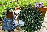 LED Solar Buchsbaum Kugel mit 20 warmweißen LEDs, beleuchtete Buchskugel Ø 20 cm, Buxbaumkugel, Gartendeko