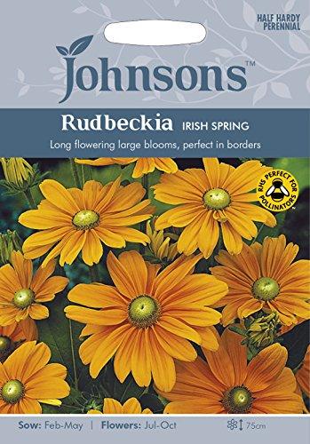 johnsons-uk-jo-fl-rudbeckia-irish-spring
