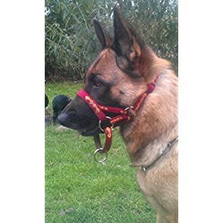 """""""BLIND DOG"""" White Colour Coded Nylon S-M L-XL Buckle Dog Collars (No/Limited Sight) PREVENTS Accidents By Warning Others of Your Dog in Advance! (S-M 10-17″Lx1″W) 51XKsp 9e3L"""