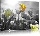wunderschöne Tulpenwiese schwarz/weiß Format: 120x80 auf Leinwand, XXL riesige Bilder fertig gerahmt mit Keilrahmen, Kunstdruck auf Wandbild mit Rahmen, günstiger als Gemälde oder Ölbild, kein Poster oder Plakat