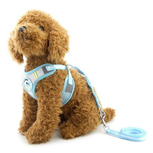 für kleine Hunde Walking Leine Set verstellbar alle Wetter kein Pull Weich gepolsterte Weste Sicherheitsgurt für Welpen Katzen (Einfach Weibliche Kostüme)
