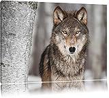 Pixxprint Wachsamer Wolf Format: 80x60 auf Leinwand, XXL riesige Bilder fertig gerahmt mit Keilrahmen, Kunstdruck auf Wandbild mit Rahmen, günstiger als Gemälde oder Ölbild, kein Poster oder Plakat