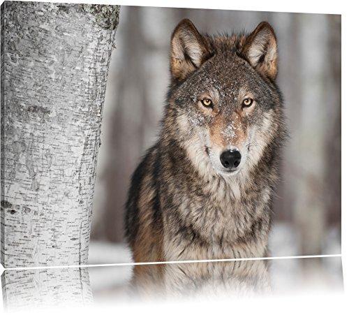 Wachsamer Wolf Format: 60x40 auf Leinwand, XXL riesige Bilder fertig gerahmt mit Keilrahmen,...