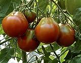 Tomaten Japanischer Trüffel Schwarz - 5 Samen