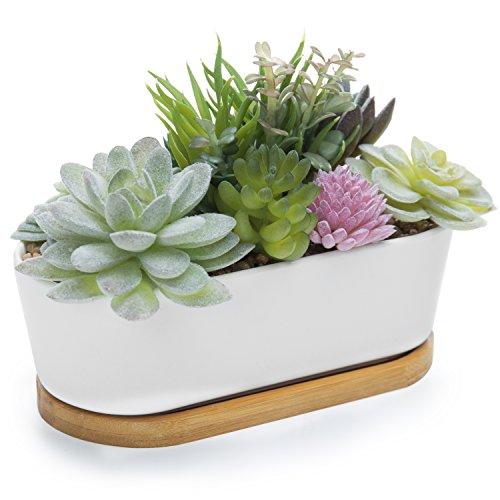 Pflanzen-Arrangement Pflanzen-Arrangement in