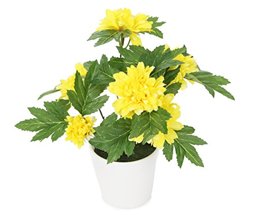 Closer To Nature 26cm Chrysanthemum Plant - Yellow