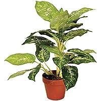 Planta artificial galatea luisae 49 cm altura, Catral 74010018