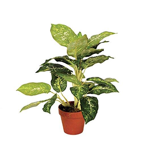 catral-allemagne-decoration-plante-galatea-luisae-49-cm-vert-50-x-14-x-14-cm-74010018