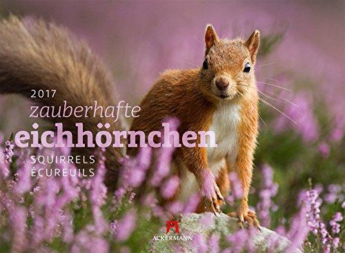 Eichhörnchen 2017 PDF Books