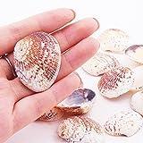 PandaHall 50 Stück Natürlichen Muschel Perlen Deko Muscheln zum Basteln - 3