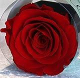 Rosa ROJA estabilizado eterna flor, natural en su pequeño bote de flor y su caja con su bolsa de regalo elegante , producto de primera calidad .