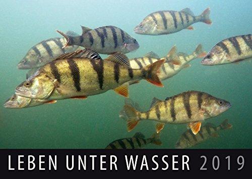 Leben unter Wasser 2019: Wandkalender