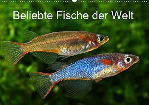 Beliebte Fische der Welt (Wandkalender 2020 DIN A2 quer): Farbenprächtige Süßwasserfische (Monatskalender, 14 Seiten ) (CALVENDO Tiere)