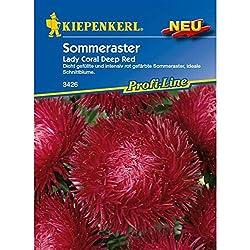 Astern Sommeraster Lady Coral Deep Red
