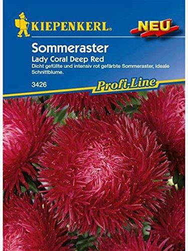 Astern Sommeraster Lady Coral Deep Red (Ernte Erde Womens)