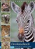 Dreikäsehoch - Tierkinder im südlichen Afrika (Tischkalender 2019 DIN A5 hoch): Nachwuchs in den Nationalparks (Monatskalender, 14 Seiten ) (CALVENDO Orte)
