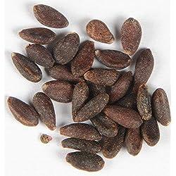 Berberitze Berberis vulgaris 70 Samen