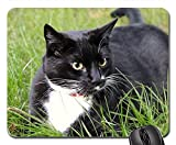 Gaming-Mauspads, Mauspad, Katzenhaustier-Tiersüßes inländisches Kätzchen Feline Pelz 1
