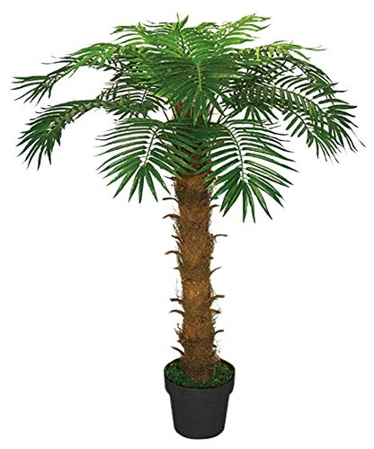 Cocotier Palmier Plante Arbre Ar...