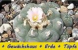SAFLAX - Anzucht - Set - Kakteen - Peyotl Kaktus