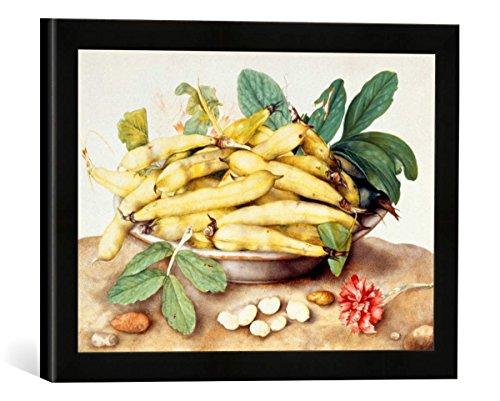 Gerahmtes Bild von Giovanna Garzoni Schale mit Schoten, Kernbohnen und Nelke, Kunstdruck im hochwertigen handgefertigten Bilder-Rahmen, 40x30 cm, Schwarz matt - Garzoni Schale