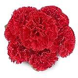 SOLEDI Blumenstrauß Künstliche Blumen Zimmer Deko Nelke für Party (Rot)